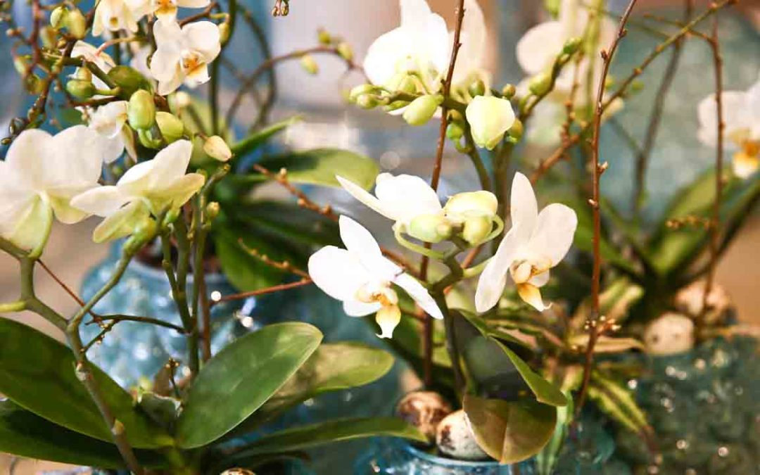 Frühling bei Glatz Blumendesign & Ambiente